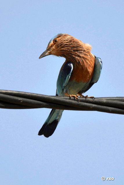 Gal Oya Nationalpark Sri Lanka Fotos Bilder Galerie