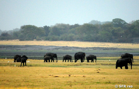 Minneriya Nationalpark